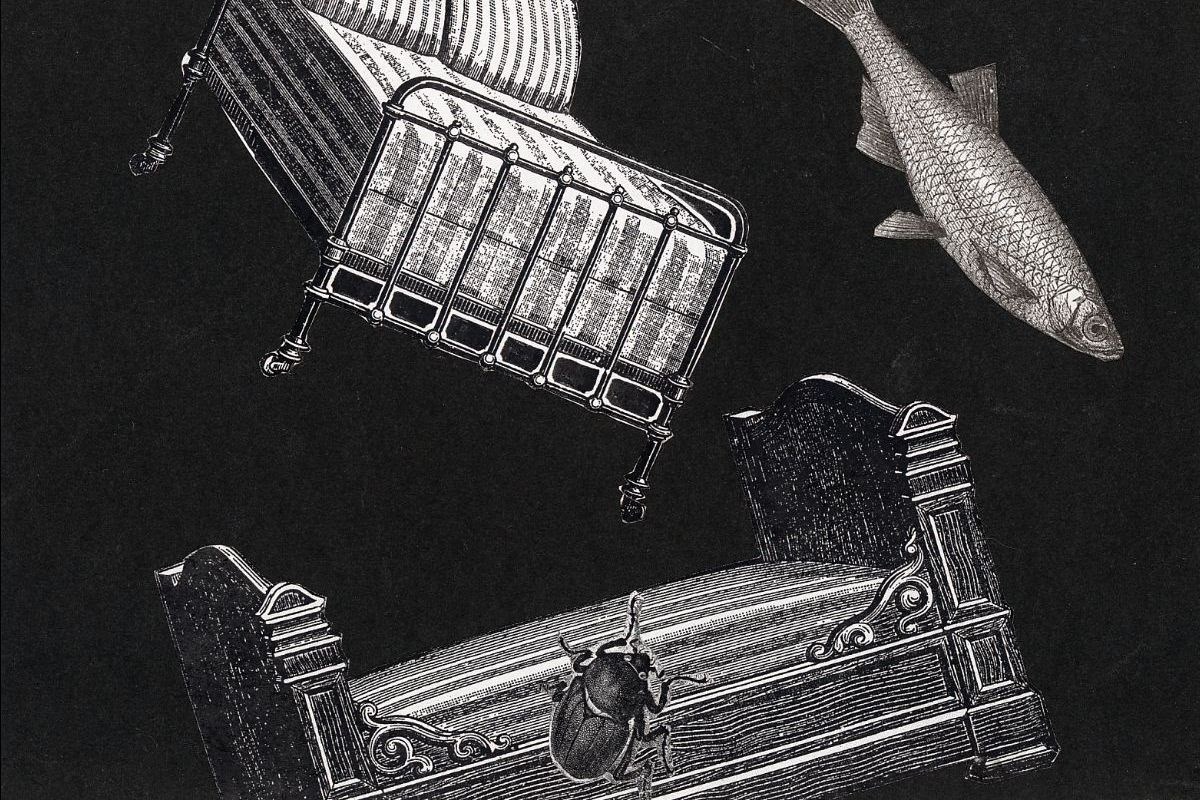 Night Reels: The Work of Stacey Steers
